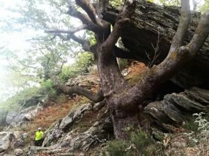 Klippan hade tur att trädet fanns där och fångade upp den annars hade den kunnat ramlat och slå sig.