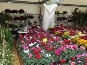 Runt ett stort torg nära Omonia hade dom laddat med massvis med blomsterstånd.