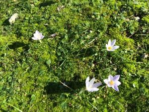 Nu grönskar det uti dalens famn nu blommar.....
